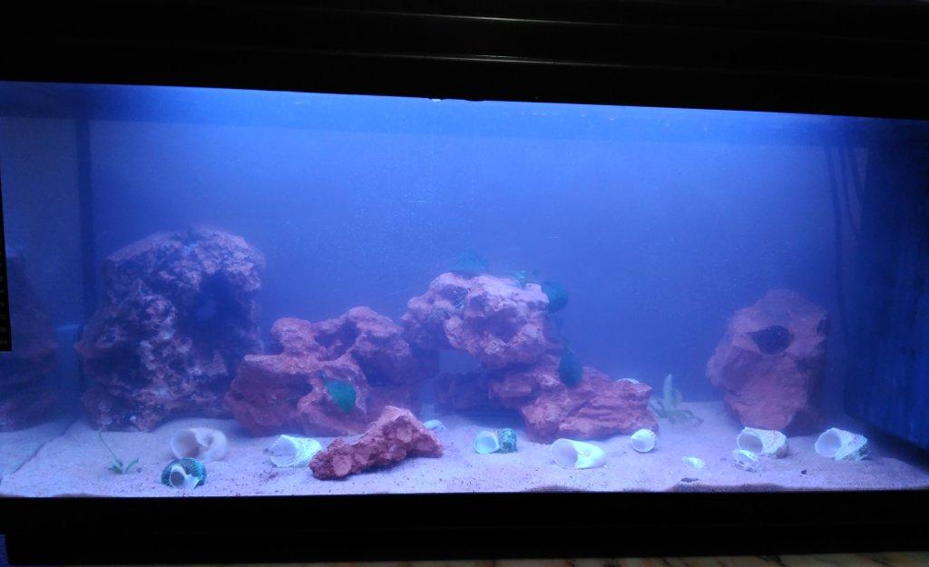 Ciclado del acuario explicado para novatos
