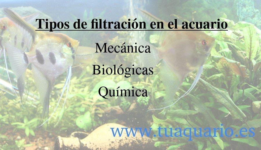 Tipos de filtración del acuario: mecánica, biológica y química