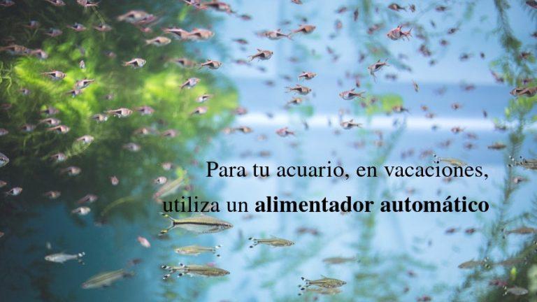 Comedero automático para peces de acuario: ¡lo mejor en vacaciones!