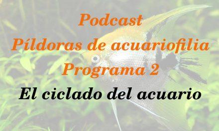 Píldoras de acuariofilia 2: Ciclado del acuario