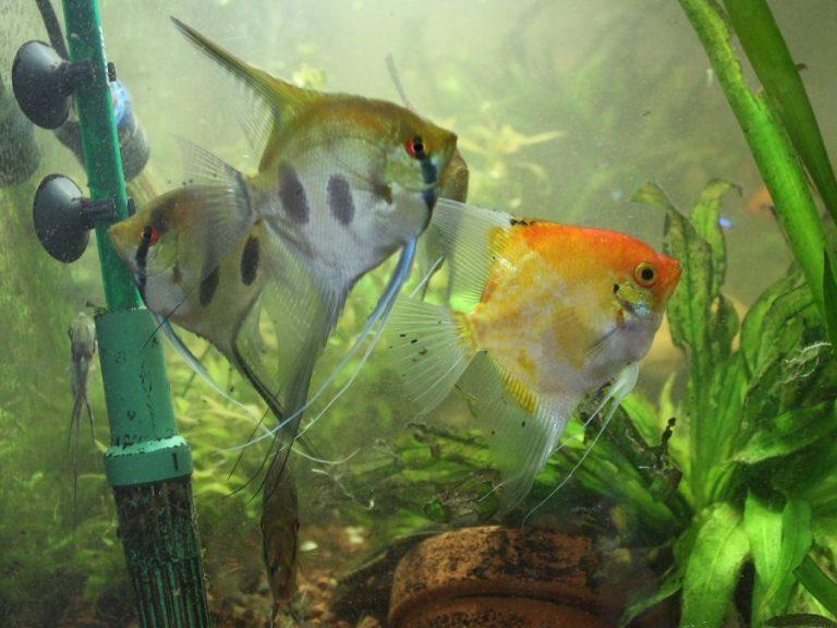 La importancia del filtro en el mantenimiento del acuario
